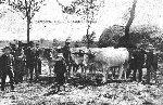 Le foirail, un jour de marché aux bestiaux